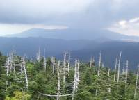 Smoky Mountains - Trees in forefront-Tennessee
