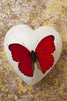 Red butterfly on white heart