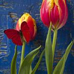 """Two tulips with red butterfly"" by photogarry"