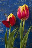 Two tulips with red butterfly