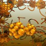 """The sea buckthorn. 2012 90/52 cm."" by arttauta"