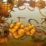 """The sea buckthorn. 2012 90/52 cm."" by arttauta"
