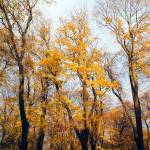 """Autumn 2"" by FantaSeaArt"