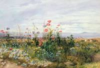 Wildflowers with a View of Dublin Dunleary (w/c on