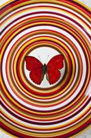 Red butterfly on plate with many circles