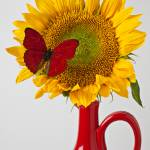 """Red butterfly on sunflower on red pitcher"" by photogarry"