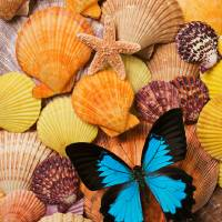 """Blue butterfly and sea shells"" by Garry Gay"
