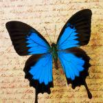 """Blue butterfly on old letter"" by photogarry"