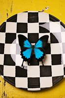 Checker plate and blue butterfly