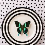 """Green and black butterfly on plate"" by photogarry"