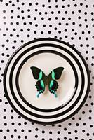 Green and black butterfly on plate