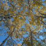 """Aspen Skylight"" by SamSherman"