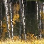 """Aspen Reflections on Casper Mountain"" by SamSherman"