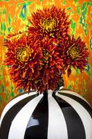 Red mums in striped vase