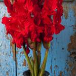 """Red glads against blue wall"" by photogarry"