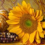 """Autumn still life"" by photogarry"