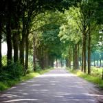 """""""Dutch Road"""" by Groecar"""