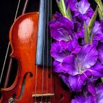 """Violin and purple glads"" by photogarry"
