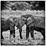 """Elephant Hug Squared"" by useatripod"