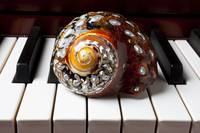 Snail shell on keys