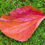 """""""pretty leaf"""" by Marianne_S_Hosein"""