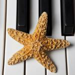 """Starfish Piano"" by photogarry"