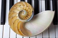 Nautilus shell on piano keys