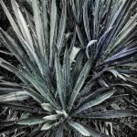 """Blue-Green Abstract"" by JeremyHermanPhoto"