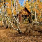 """Old Cabin In The Aspens"" by jameseddy"