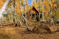Old Cabin In The Aspens
