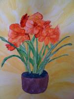 AMARYLLIS IN ORANGE