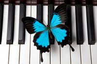 Blue butterfly on piano keys