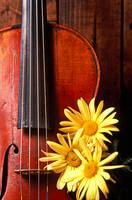 Violin with daises