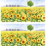 """sunflowers and bicyclists print"" by studiobythesound"