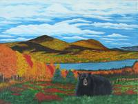 Catskill Mountain Black Bear