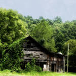 """Barn with Vines"" by joegemignani"