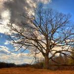 """Tree at Center for Spiritual Living Asheville"" by joegemignani"