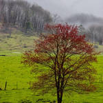 """Red Tree and Creek,Waynesville NC"" by joegemignani"