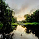 """Duck Pond"" by joegemignani"