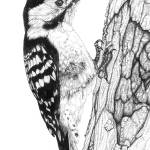 """Greater Spotted Woodpecker (square)"" by Eris-Artwork"