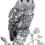 """Tawny Owl (cropped)"" by Eris-Artwork"