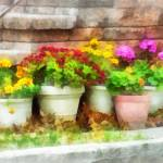 """Flowerpots With Autumn Flowers"" by susansartgallery"