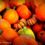 """Pumpkin Harvest"" by BlueFrogPhotography"