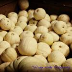 """White Pumpkins"" by BlueFrogPhotography"