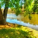 """""""Ducks at Daylesford"""" by MikeNichol"""
