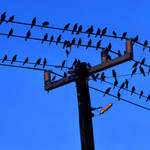 """The Birds#2"" by joegemignani"