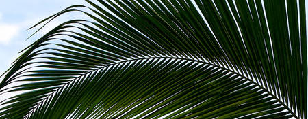 Palm Frond-Horizontal