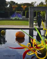 Chihuly - From the Infinity Pool