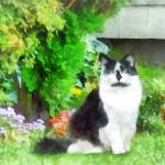 """Black and White Cat by Flowers"" by susansartgallery"
