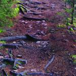 """""""Trail of Roots - Vertical Panorama"""" by chrisromano"""